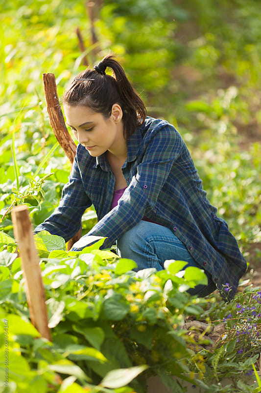 Woman taking care of the crops. by Mosuno for Stocksy United