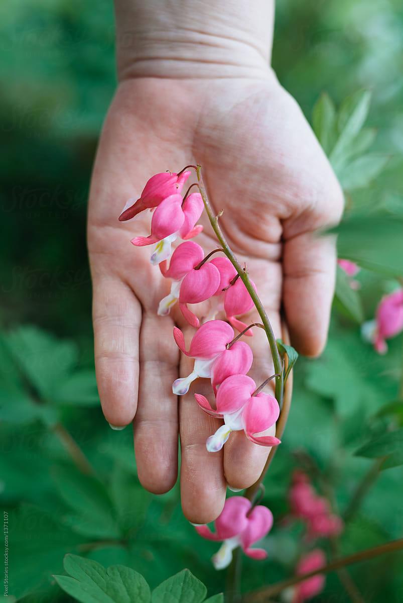 Hand holding bleeding heart flower stocksy united hand holding bleeding heart flower by pixel stories for stocksy united mightylinksfo