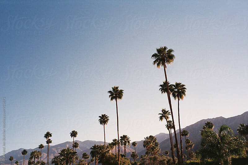 Palm Springs Horizon by Brad and Jen Butcher for Stocksy United