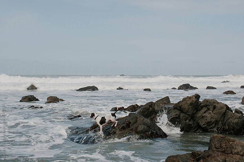 Dog on Rock in Ocean by Sidney Morgan for Stocksy United