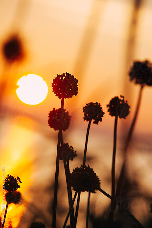Plants at sunset by Blai Baules for Stocksy United