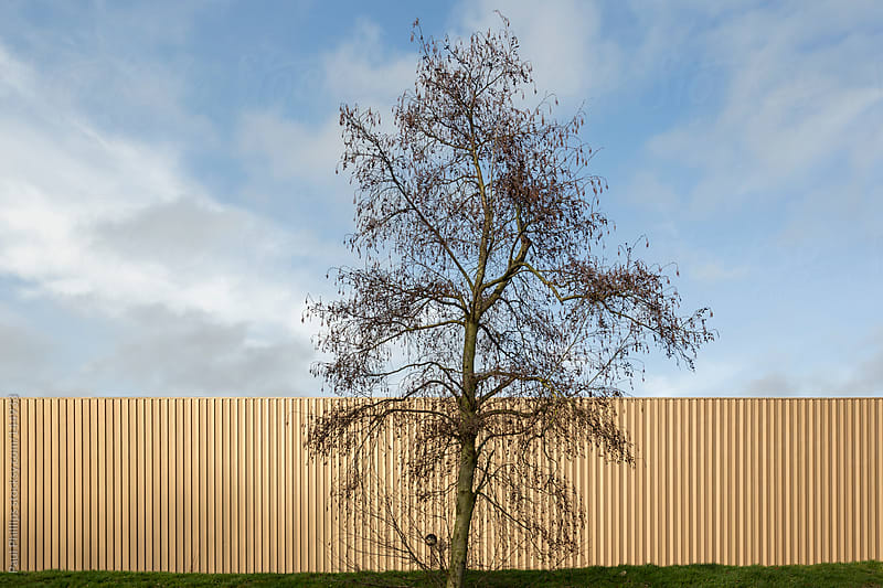Solitary tree and industrial building by Paul Phillips for Stocksy United