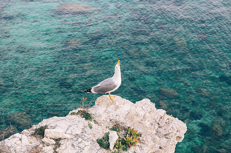 Seagull over a cliff by Luca Pierro for Stocksy United