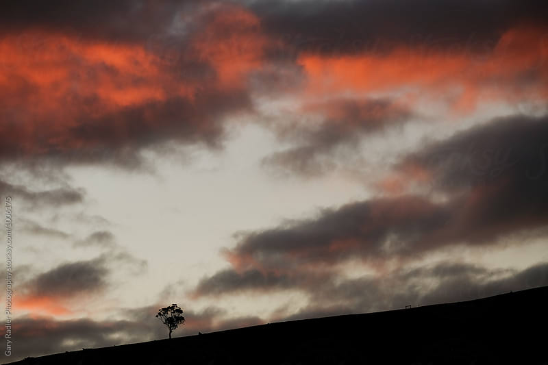 Silhouette of a Eucalyptus Tree on a Hill by Gary Radler Photography for Stocksy United