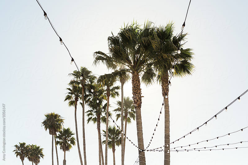 Palm trees and patio lights by Amy Covington for Stocksy United