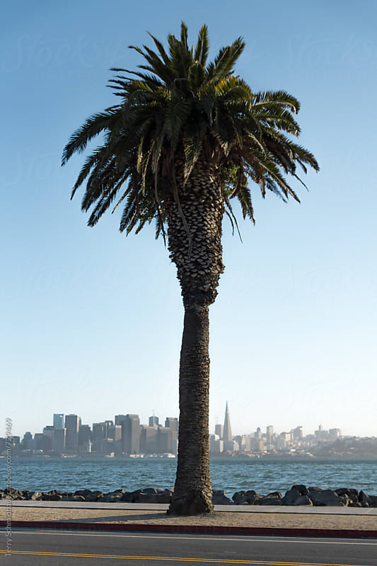 San Francisco from Treasure Island by Terry Schmidbauer for Stocksy United