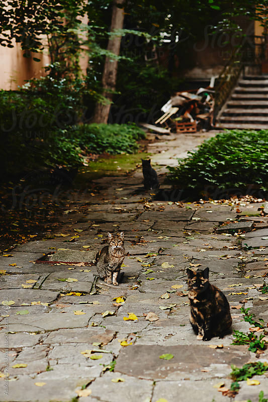 stray cats  by Atakan-Erkut Uzun for Stocksy United