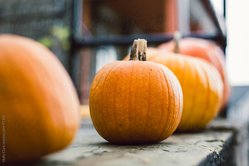 A row of pumpkins sit on a city porch. by Holly Clark for Stocksy United