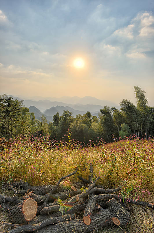 Lishan - Wild Flowers and Bamboo Mountains by Andy Brandl for Stocksy United