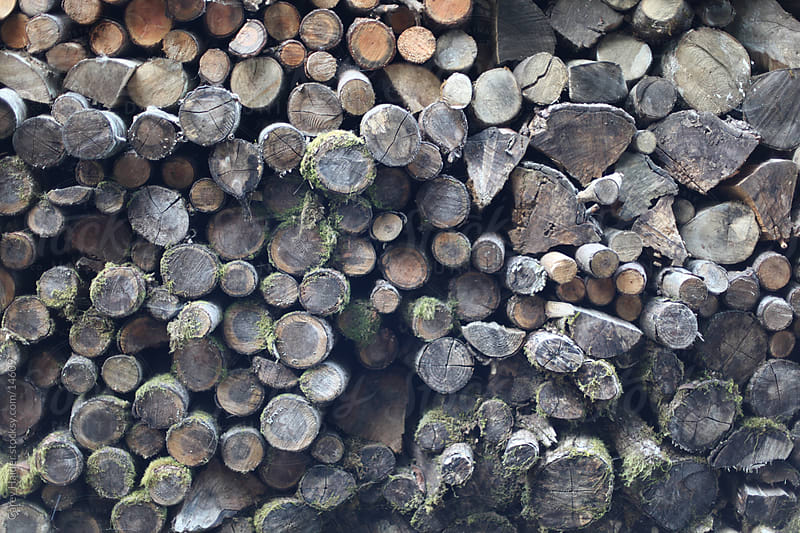 Wood Pile by Carey Haider for Stocksy United