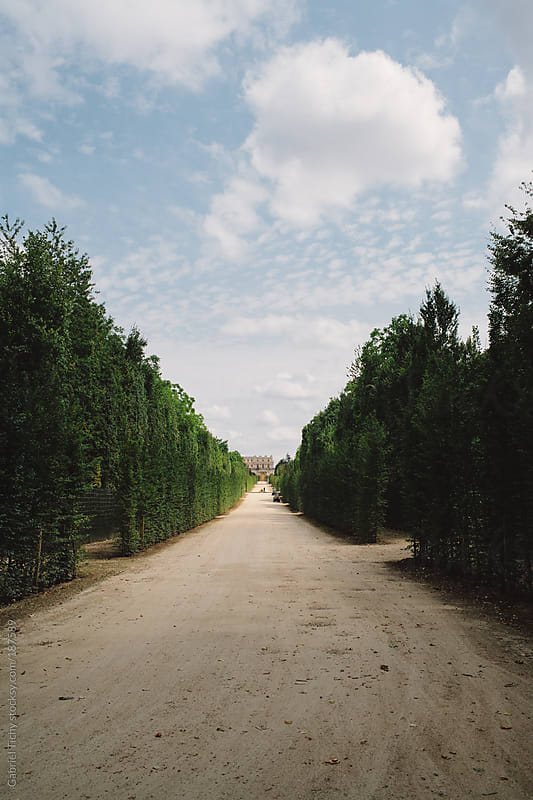 Dirt road lined by trees by Gabriel Tichy for Stocksy United