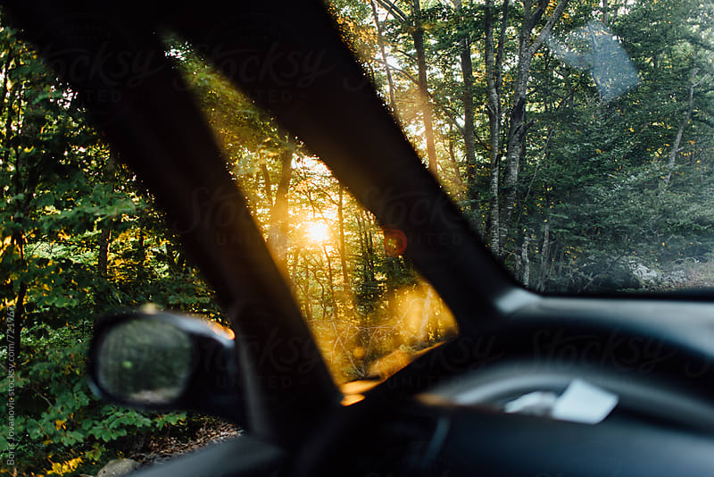 Beautiful sunrise shot through forest, shot from the inside of car by Boris Jovanovic for Stocksy United