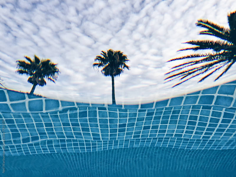 Palm trees from under water in outdoor pool by Neil Warburton for Stocksy United