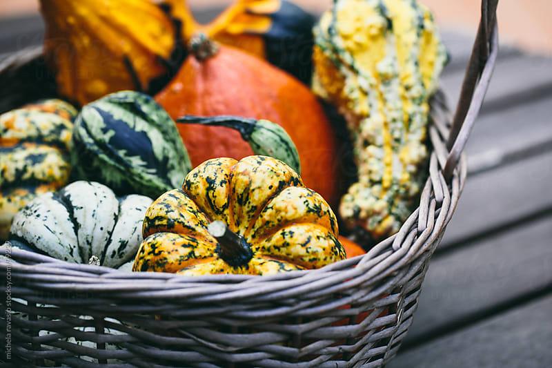 Pumpkins by michela ravasio for Stocksy United