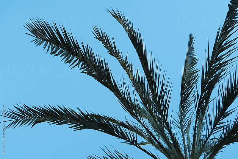 Palm tree leaves by Bisual Studio for Stocksy United