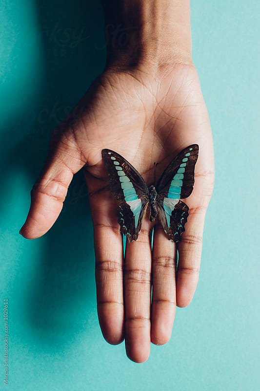 A turquoise butterfly resting on a hand against a turquoise background by Maresa Smith for Stocksy United