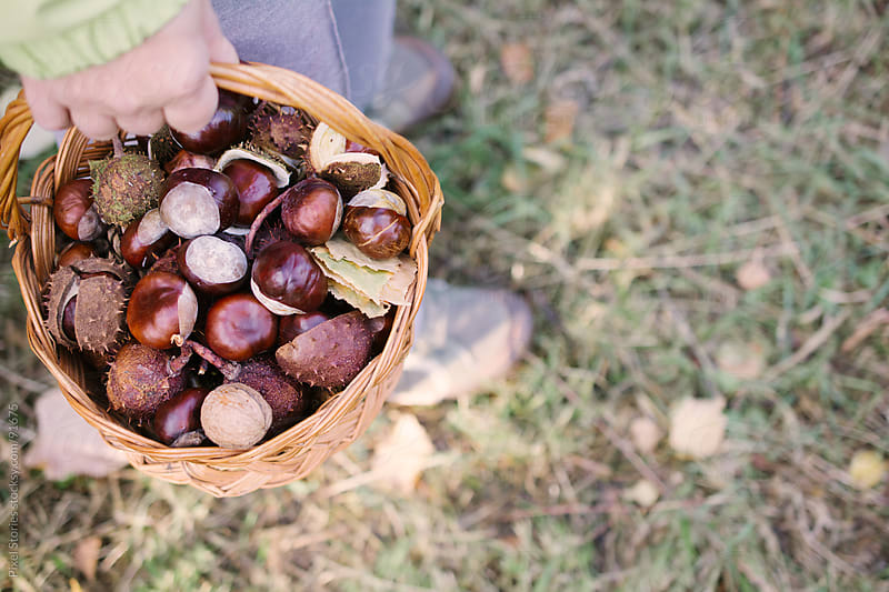 Person holding basket with chestnuts by Pixel Stories for Stocksy United