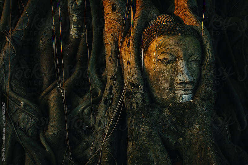 Buddha inside banyan tree by ZHPH Production for Stocksy United
