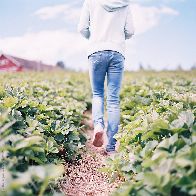 Young girl in hoodie and jeans walking in strawberry field by Atle Rønningen for Stocksy United