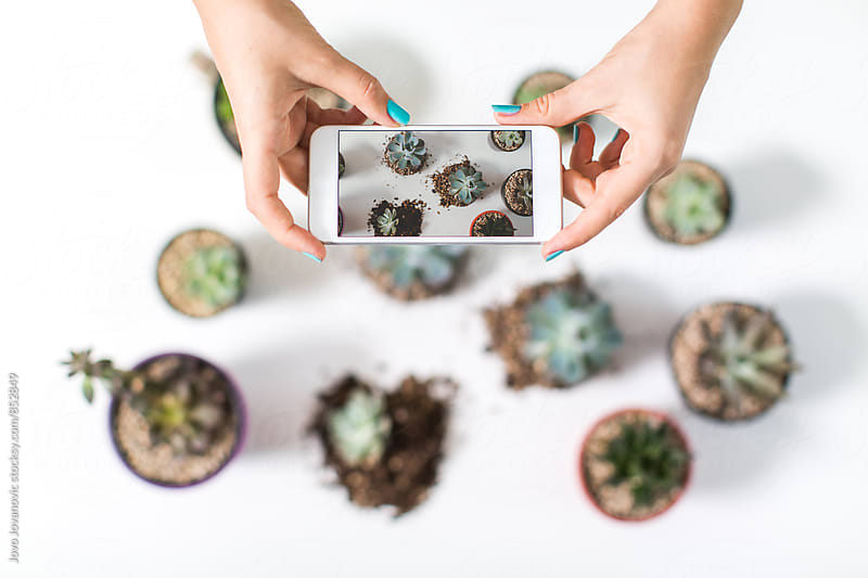 Closeup of hands taking a photo of a group of succulent plants in little pot on a white table  by Jovo Jovanovic for Stocksy United