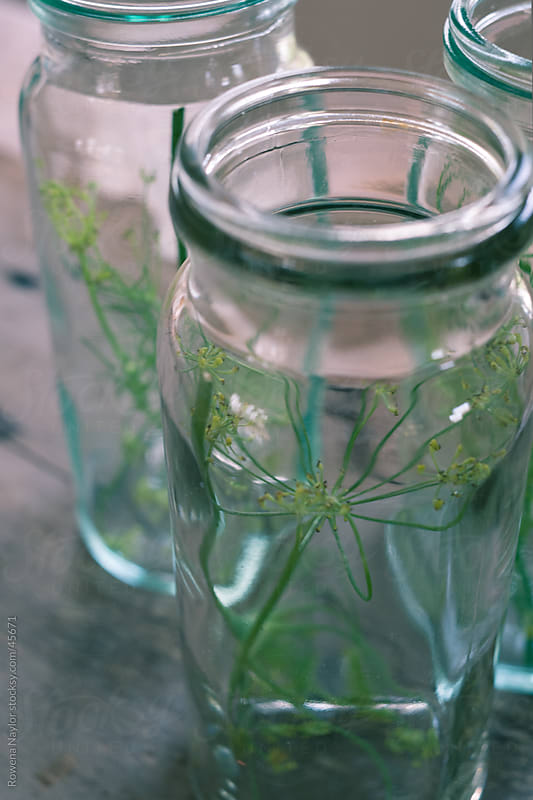 Glass Pickling Jar with Dill Inside by Rowena Naylor for Stocksy United