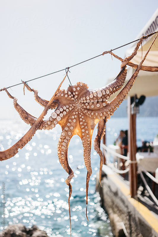 Octopus being air dried, Santorini by Kirstin Mckee for Stocksy United