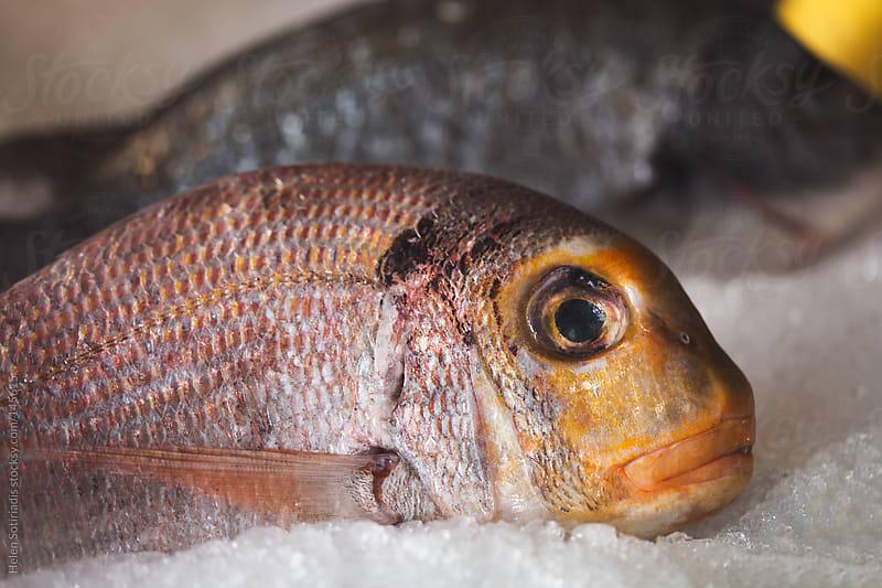 Fresh Fish on Ice by Helen Sotiriadis for Stocksy United