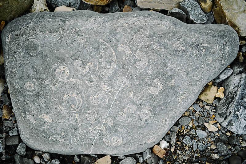 Ammonites by Kirstin Mckee for Stocksy United