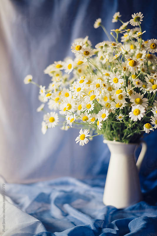 Camomile bouquet by Pixel Stories for Stocksy United