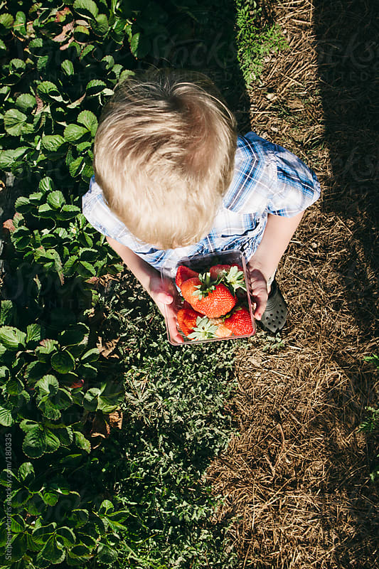 Boy fresh picked strawberries by Stephen Morris for Stocksy United