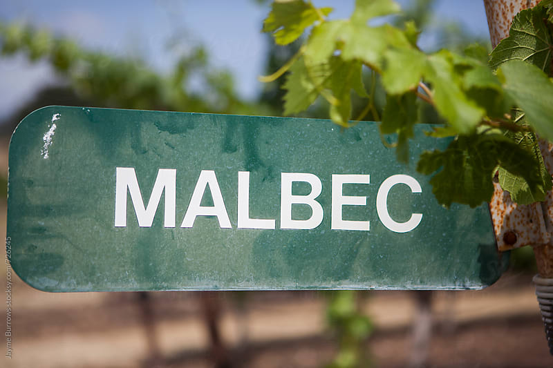 Malbec Sign by Jayme Burrows for Stocksy United