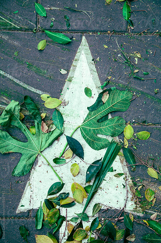 Road Marking Arrow with Autumn Leaves by Eldad Carin for Stocksy United