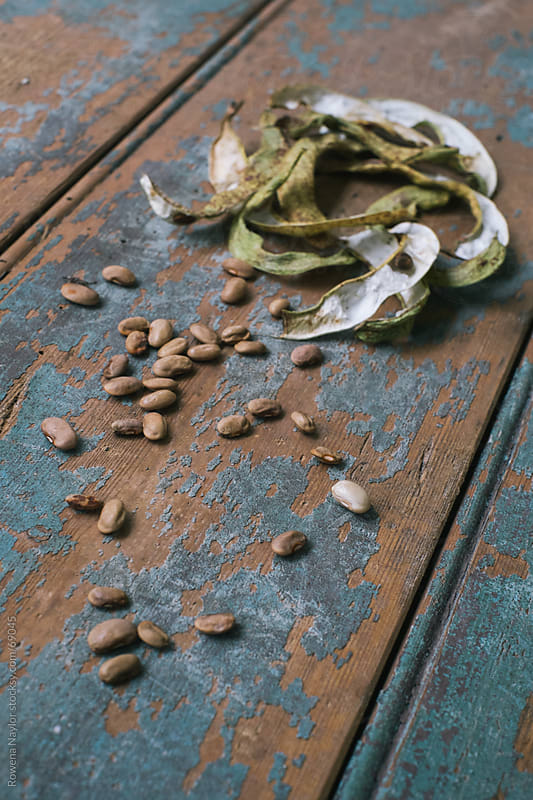 Seed Saving by Rowena Naylor for Stocksy United
