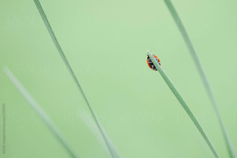 Ladybug climbing by RG&B Images for Stocksy United