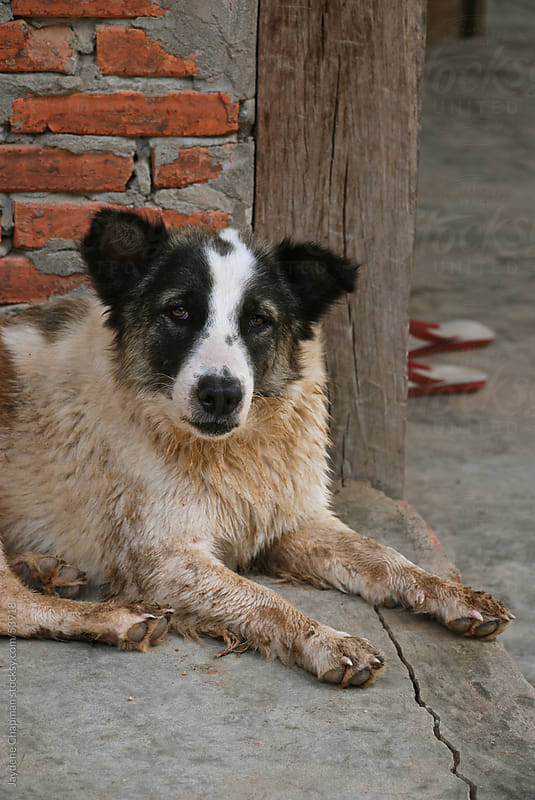 Dirty sad old dog sitting outside on the concrete, Laos, Southeast Asia by Jaydene Chapman for Stocksy United