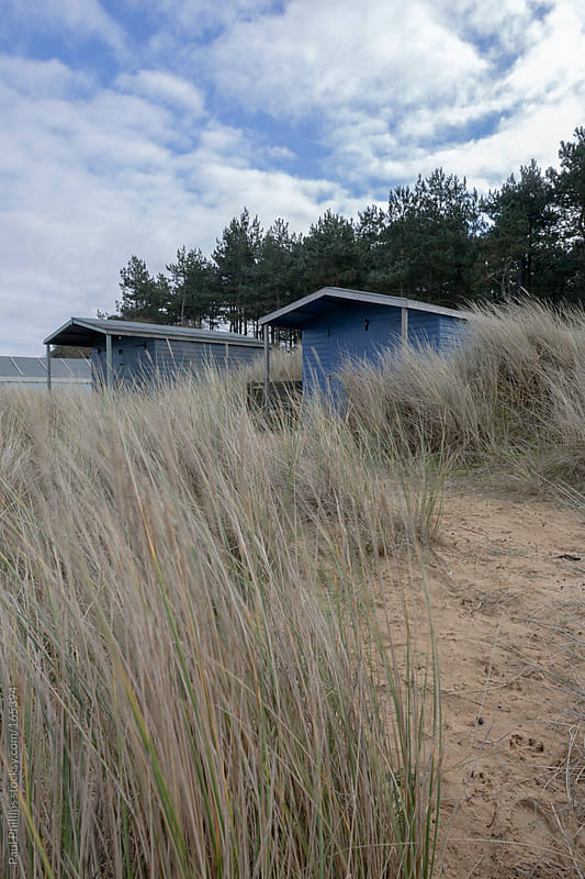 Beach huts set amongst tall beach grass and evergreen trees by Paul Phillips for Stocksy United