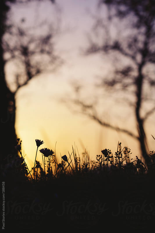 Spring meadow during sunset by Pixel Stories for Stocksy United