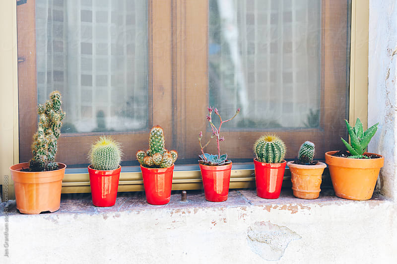 Succulents on a window ledge by Jen Grantham for Stocksy United