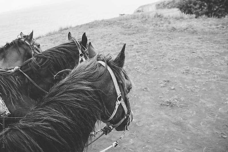 Horseback Riding by Jen Grantham for Stocksy United