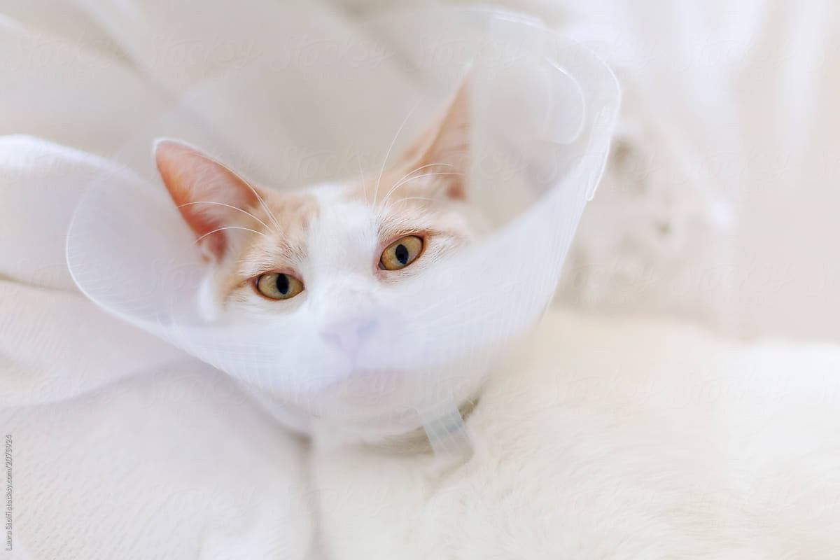Distressed cat with Buster collar around his neck in order
