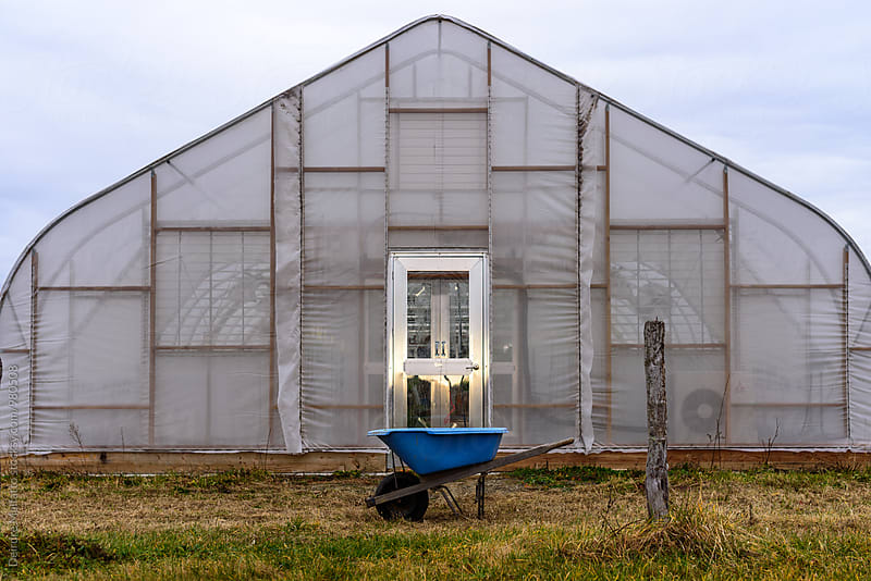 greenhouse with blue wheelbarrow by Deirdre Malfatto for Stocksy United