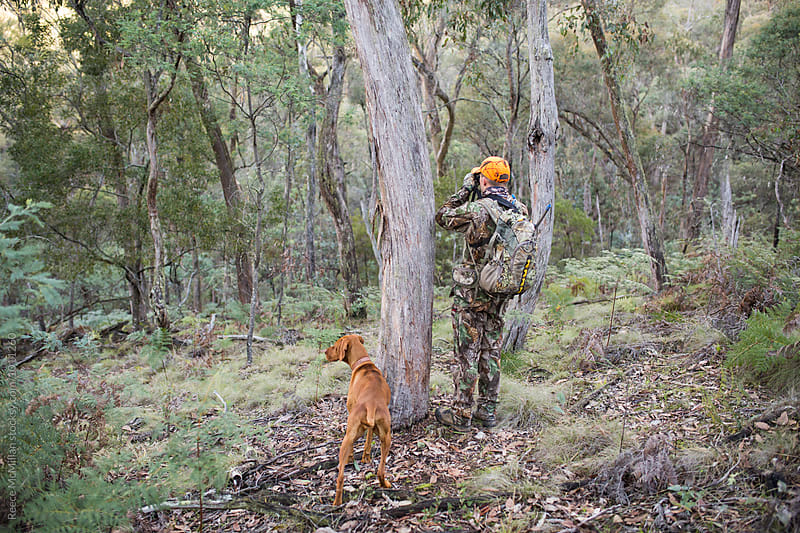 Hunter and Dog in the bush, searching for deer by Reece McMillan for Stocksy United