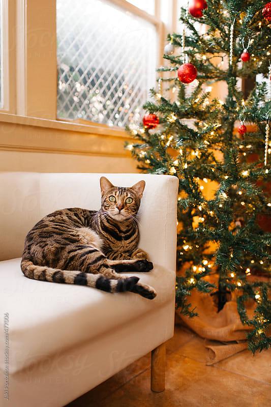 Christmas kitty by Jaki Portolese for Stocksy United