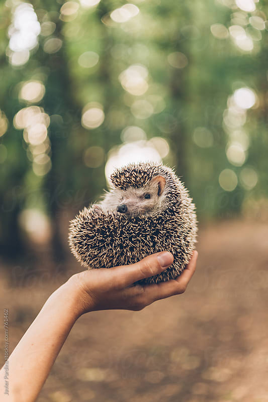 hedgehog in the hands of a young girl by Javier Pardina for Stocksy United