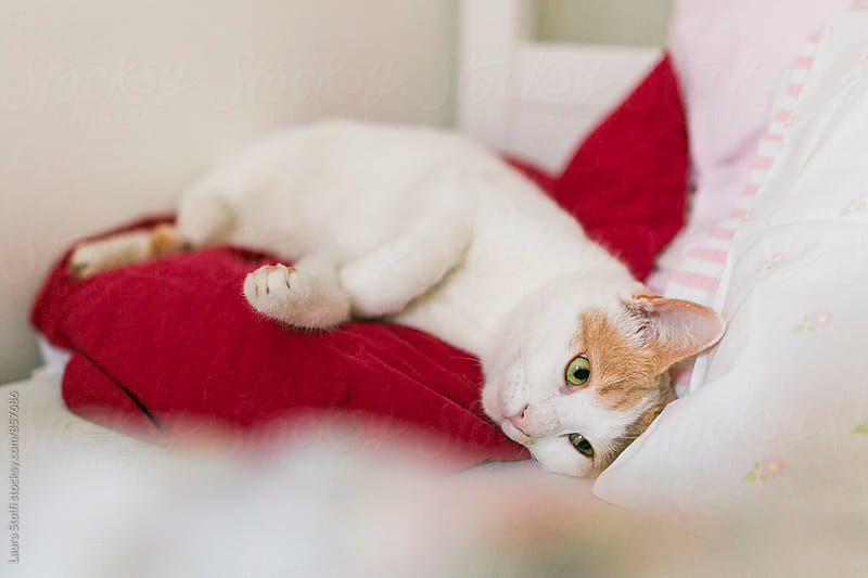 Lazy cat laying on pillow on bed by Laura Stolfi for Stocksy United
