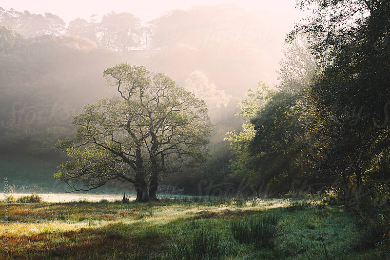Morning sunlight over a tree in the mist. Cumbria, UK. by Liam Grant for Stocksy United