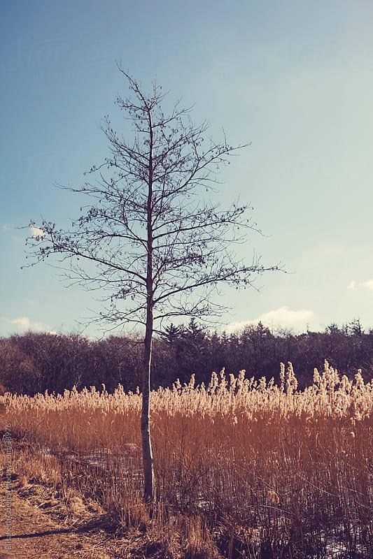 Tree in winter in Denmark by Elisabeth Coelfen for Stocksy United