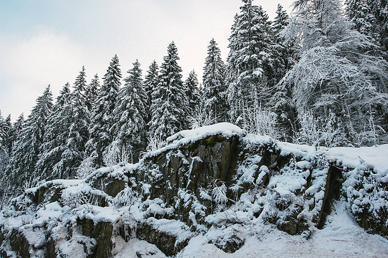 Snow covered trees in Black Forest by Peter Wey for Stocksy United