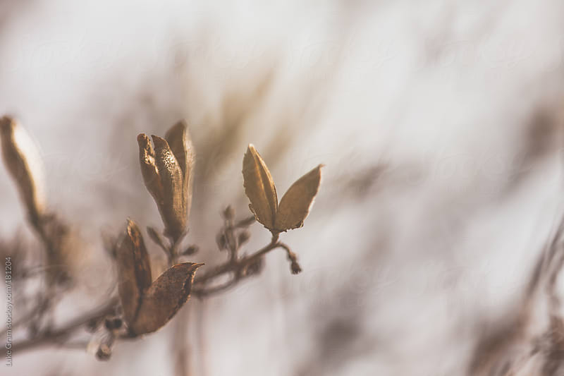 Signs of Spring by Luke Gram for Stocksy United