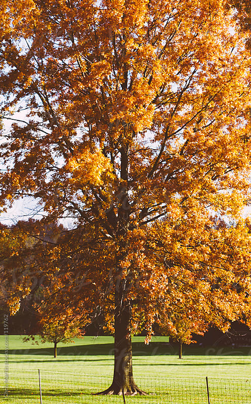 Fall Leaves by Chris Martin for Stocksy United